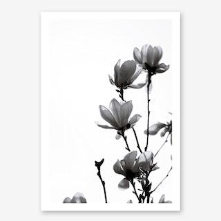 Black Magnolia in Art Print