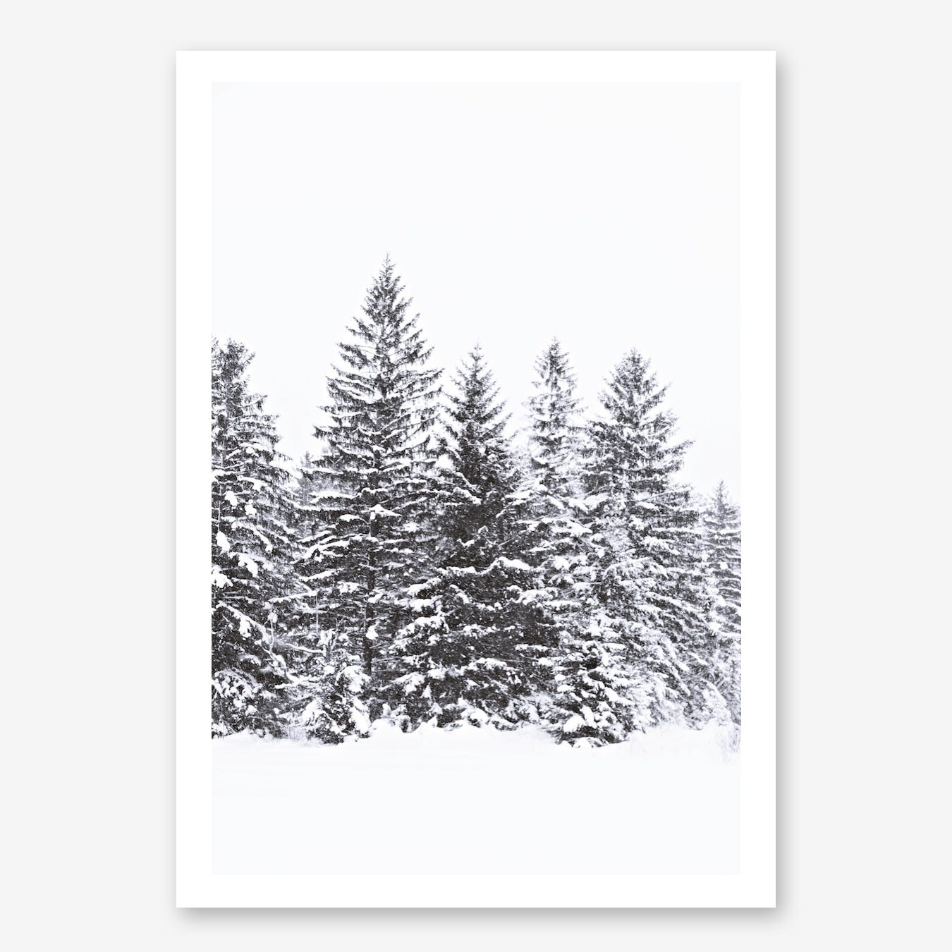 Black Winter Trees in Print
