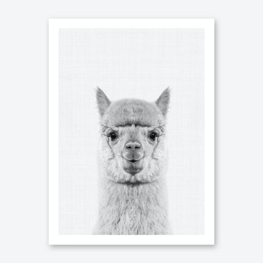 Llama Portrait Print