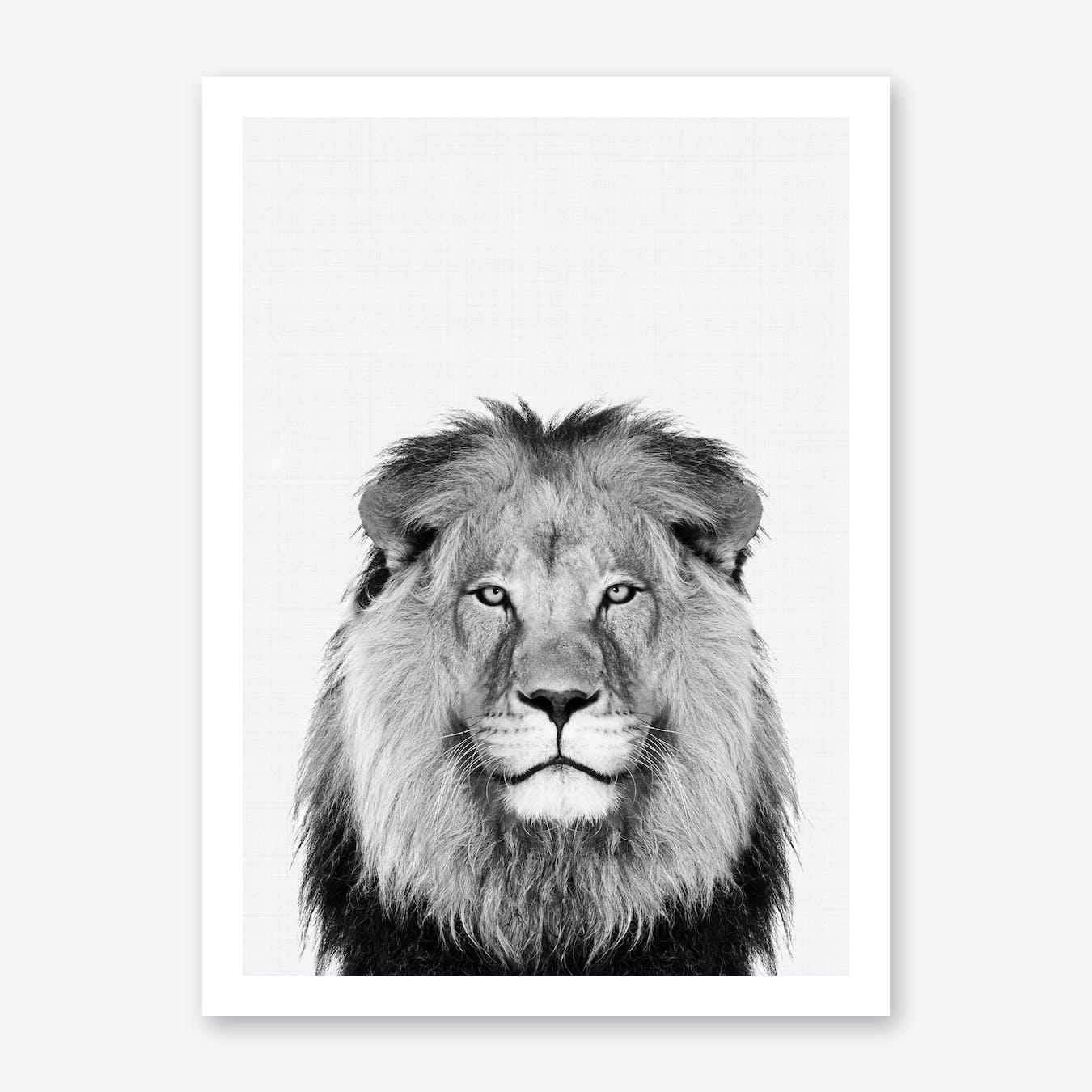 Lion Portrait Print