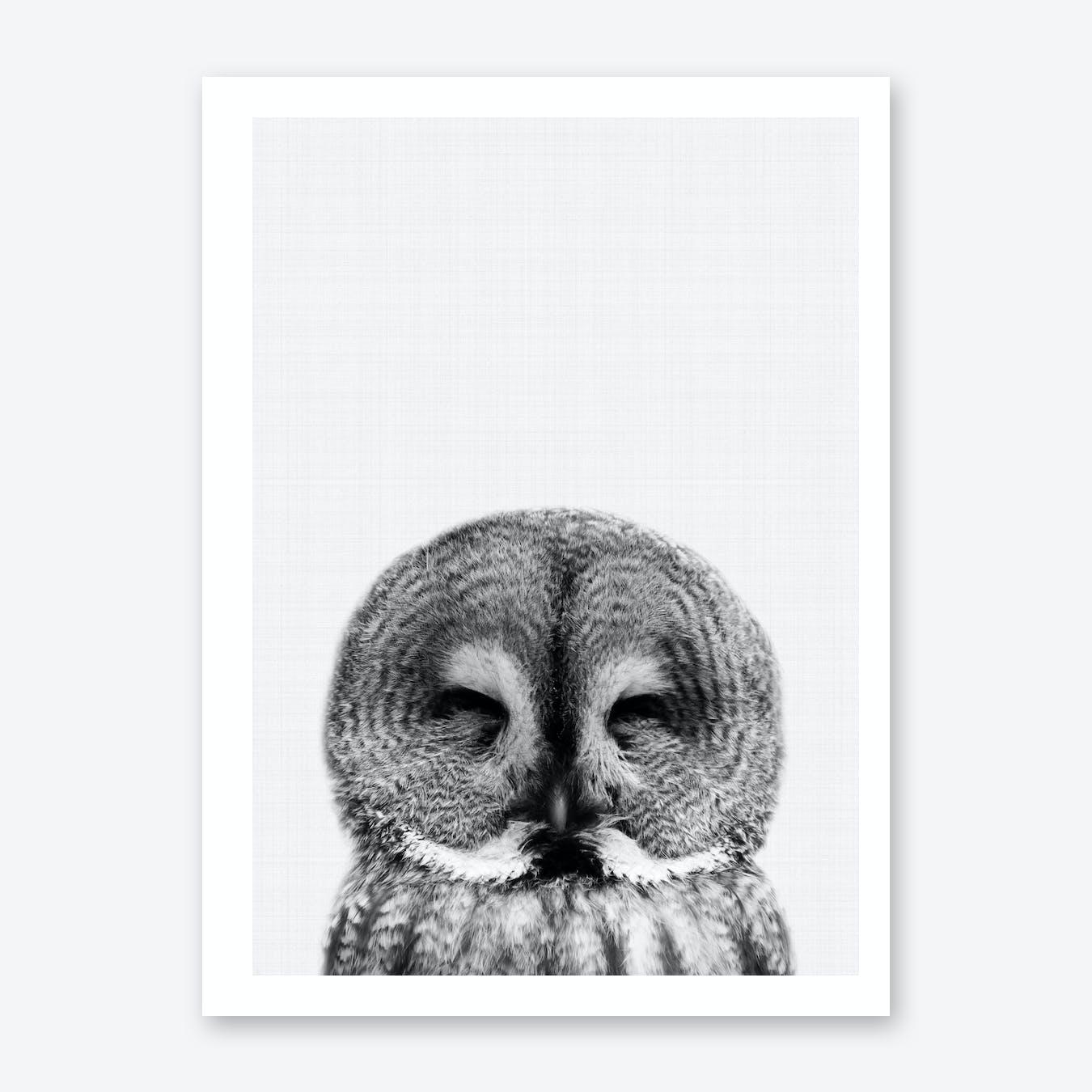 Owl Portrait 2 Print