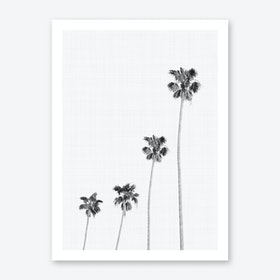 Palm 1 Art Print