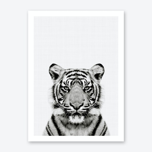 Tiger Portrait Print
