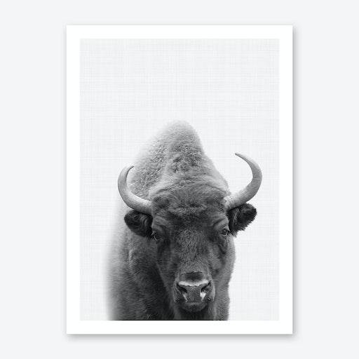 Bison Portrait Print