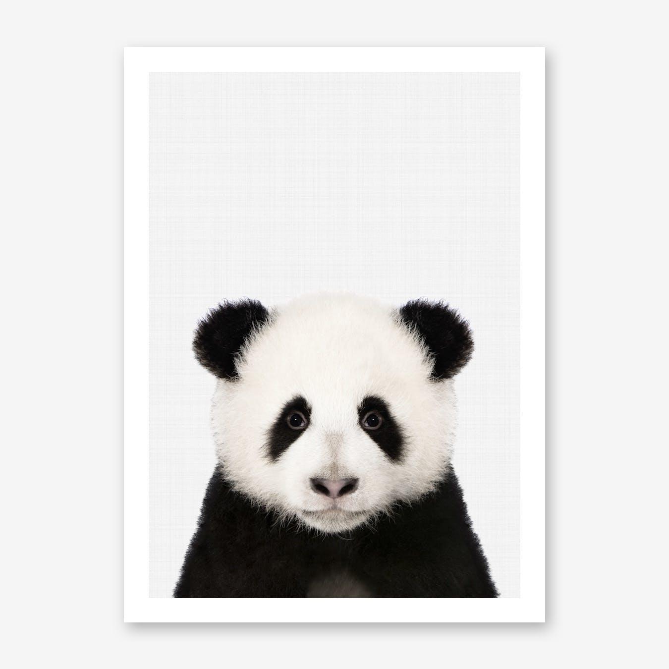 Panda II