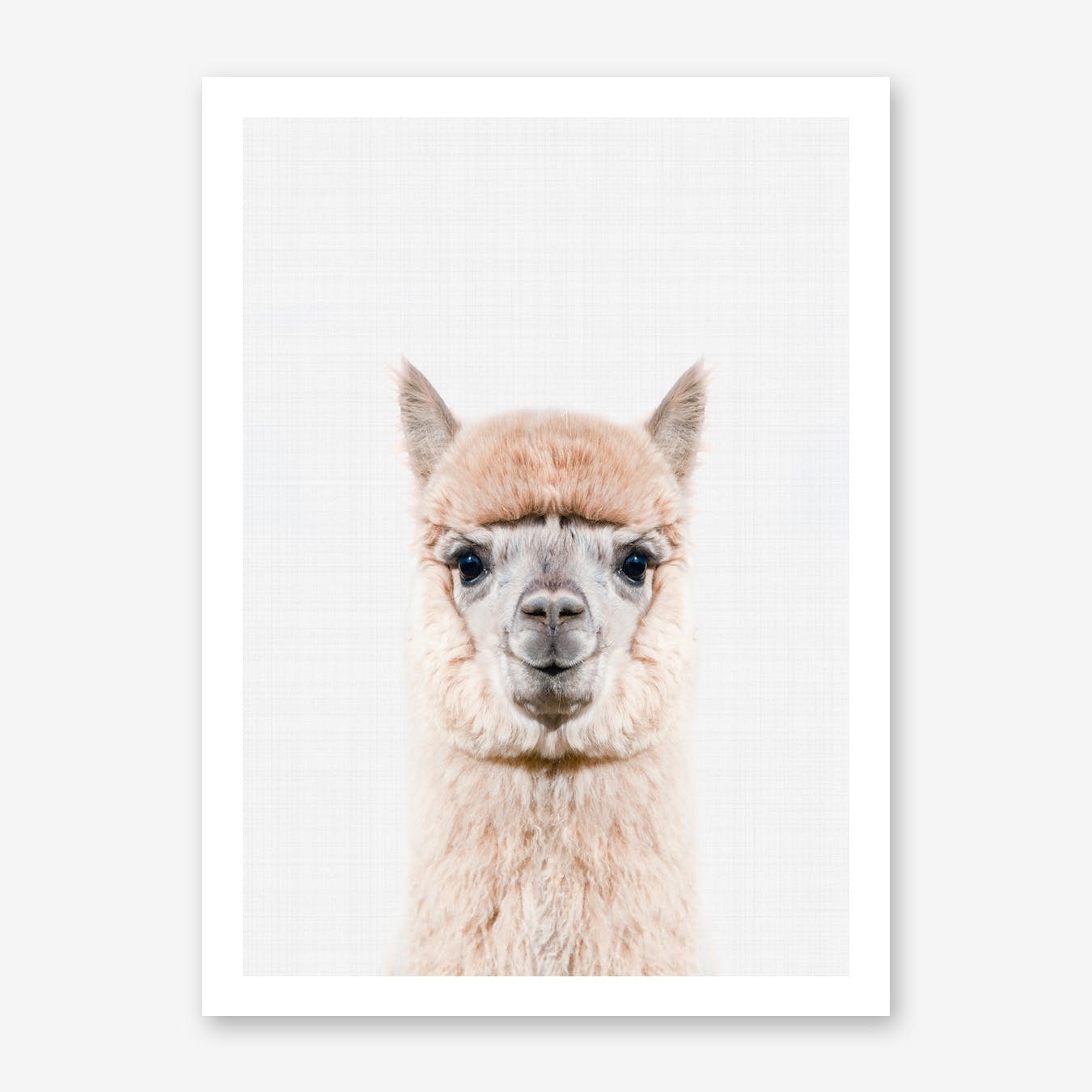 Cool Alpaca Art