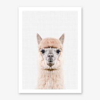 Alpaca II Art Print