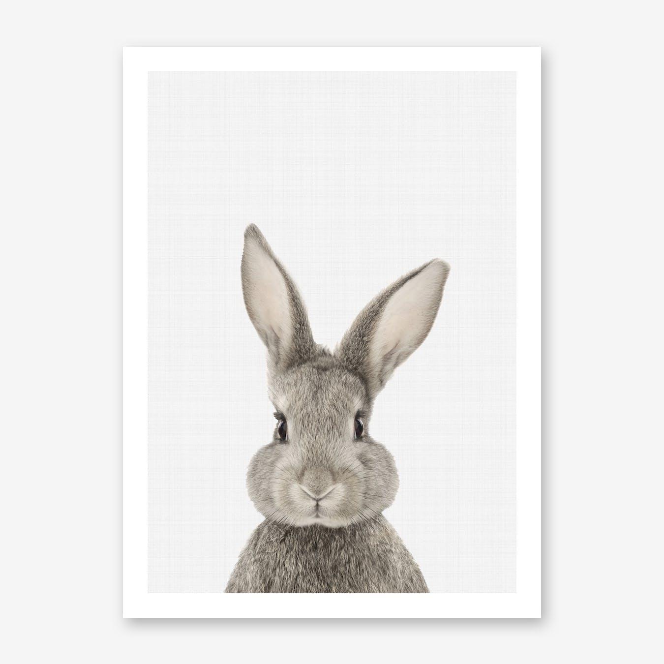 Rabbit II