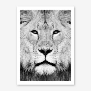 Lion III Art Print