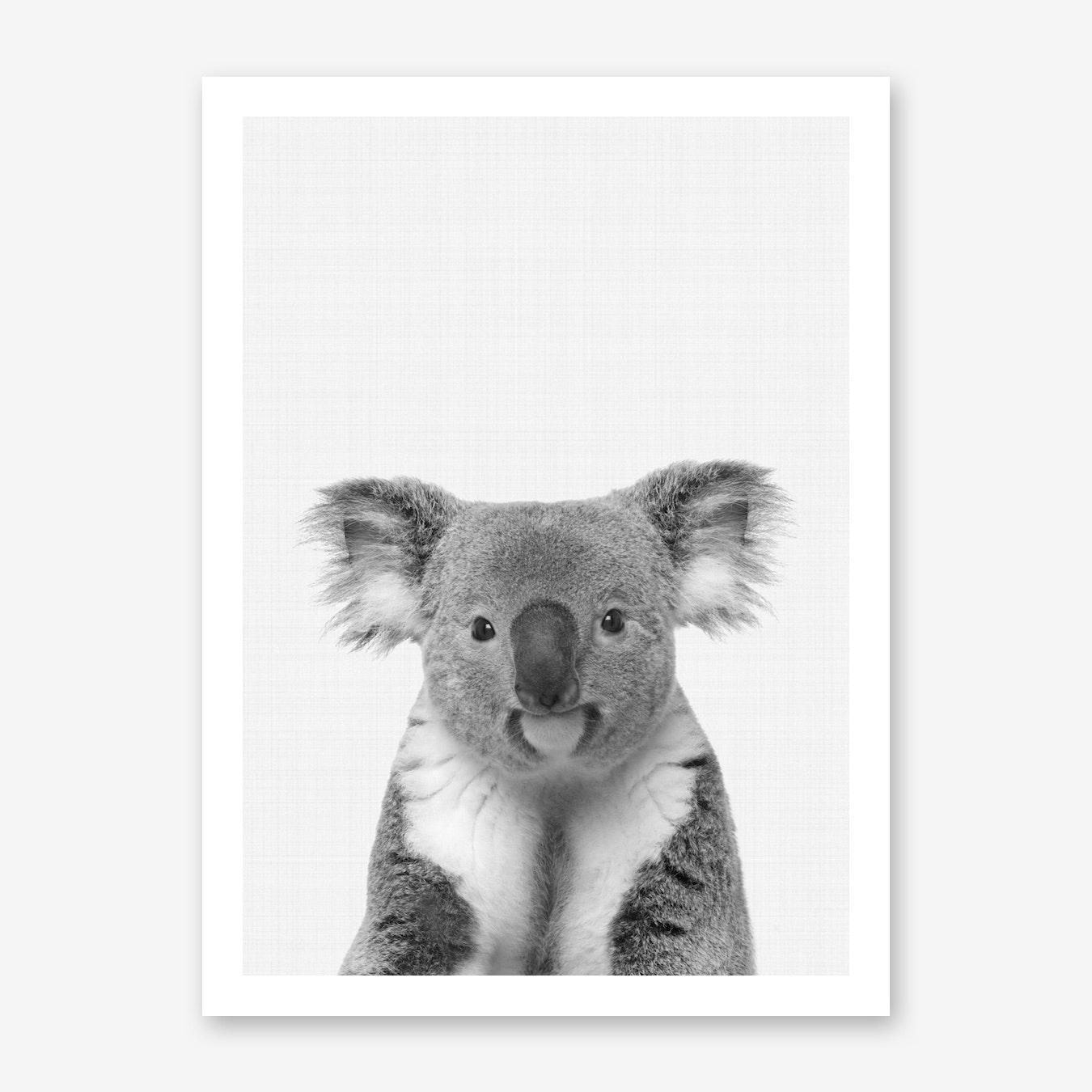 Koala Portrait Wall Art Print Free Shipping Fy