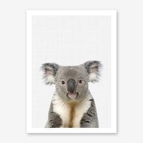 Koala Portrait II