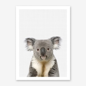Koala Portrait II Art Print