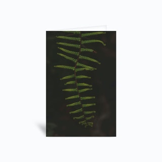 Fern 1 Greetings Card