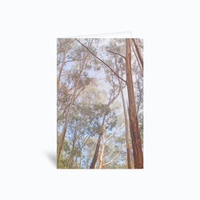 Eucalyptus Forest Greetings Card