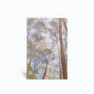 Eucalyptus Forest Greetings Card