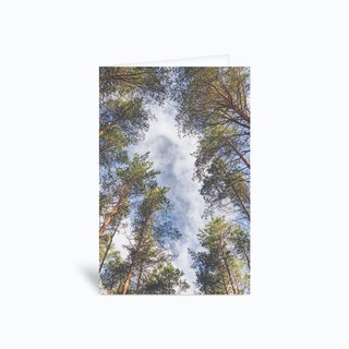 A Walk In The Forest Greetings Card