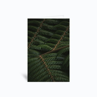 Fern 3 Greetings Card