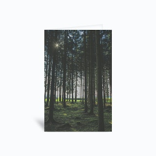 In The Forest Greetings Card