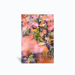 Colorful Twigs Greetings Card