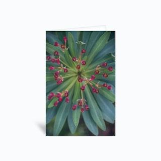 Blooming Succulent Greetings Card