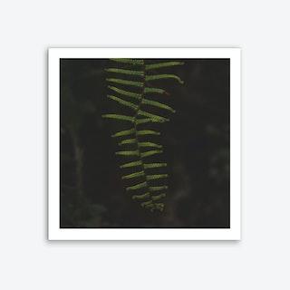 Fern 1 Art Print