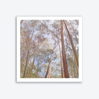 Eucalyptus Forest Art Print