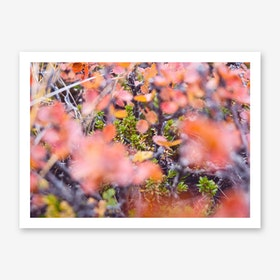 Colorful Twigs Art Print