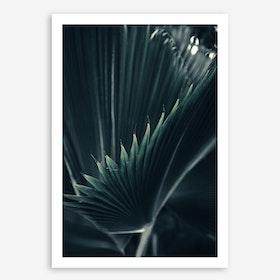 Palm Shade 1 Art Print