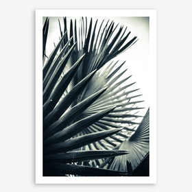 Palm Shade 2 Art Print