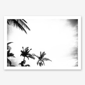 Palm Shade 4 Art Print