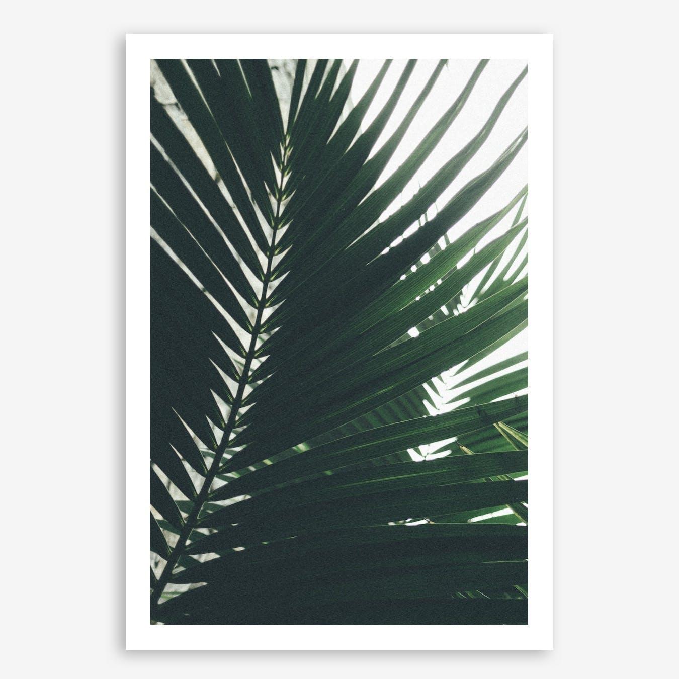 Palm Shade 5