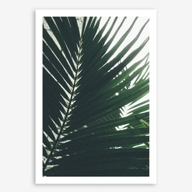 Palm Shade 5 Art Print