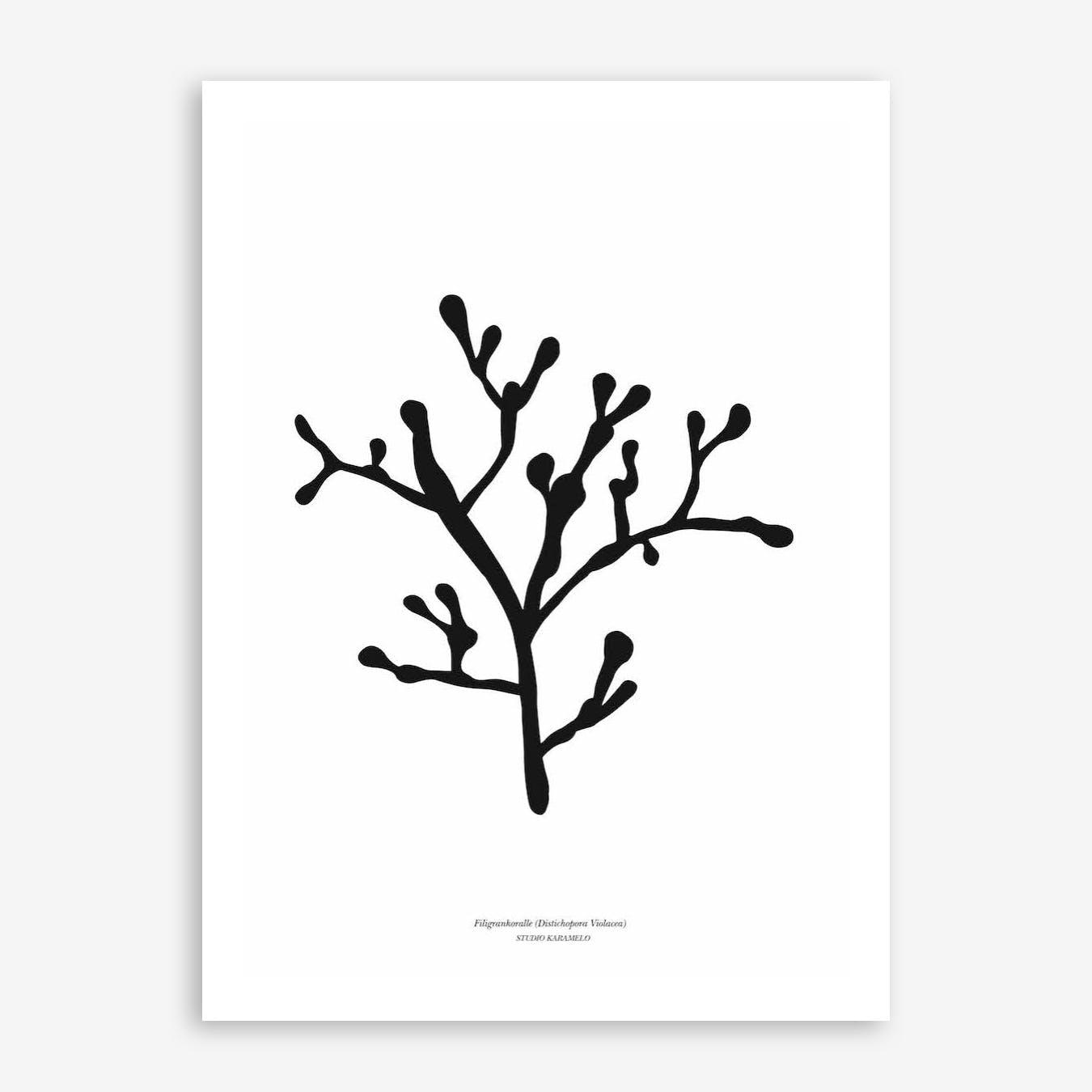 Filigrankoralle Print