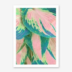 Hosta Multicolor Art Print