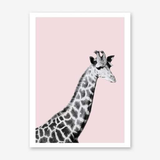 Giraffe on Pink
