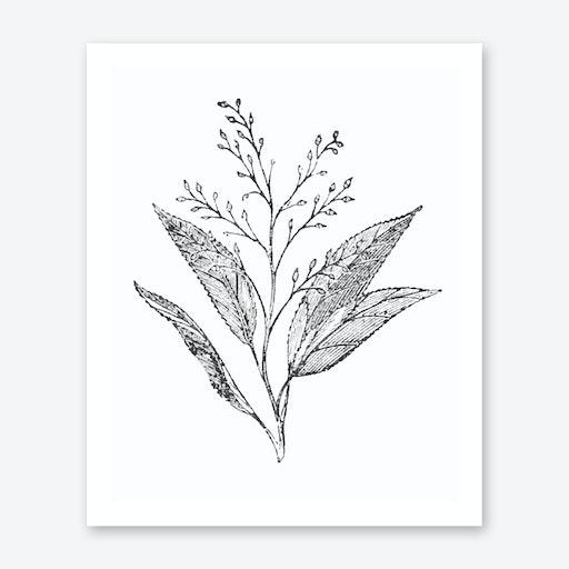 Botanical Leaves and Stem Print