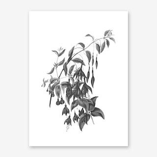 Globose Fuschia Art Print