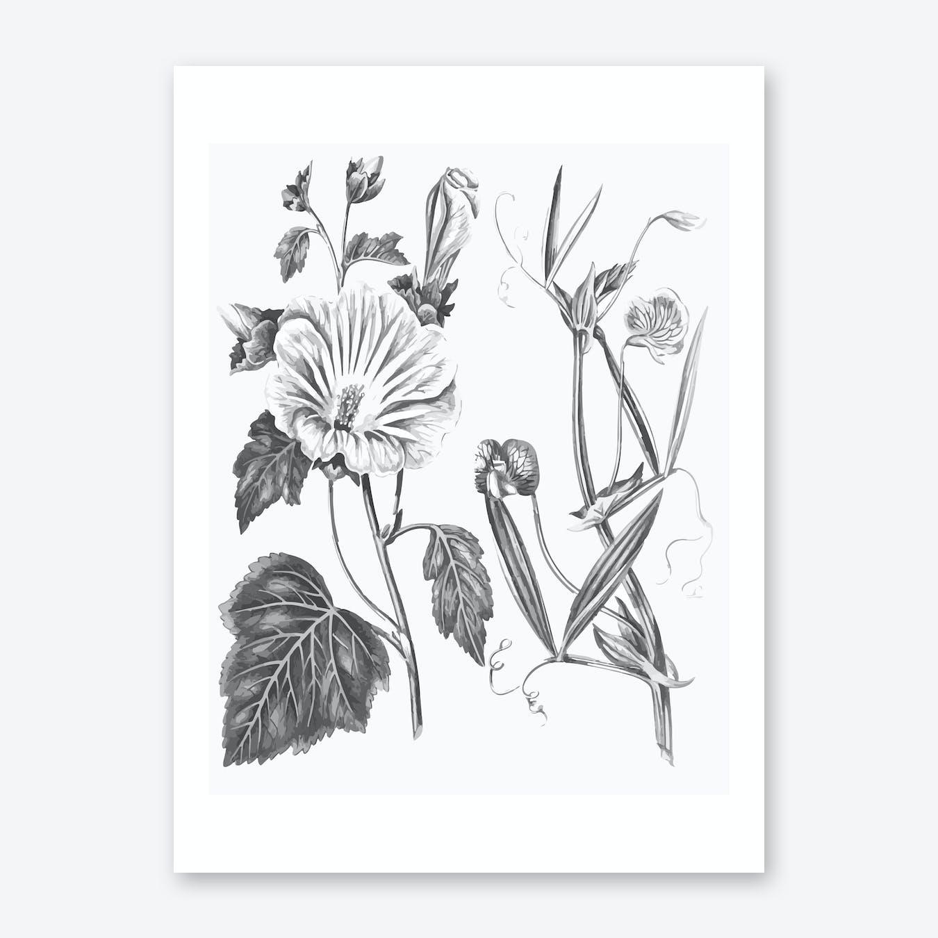 Annual Lavatera Blue Lathyrus Print