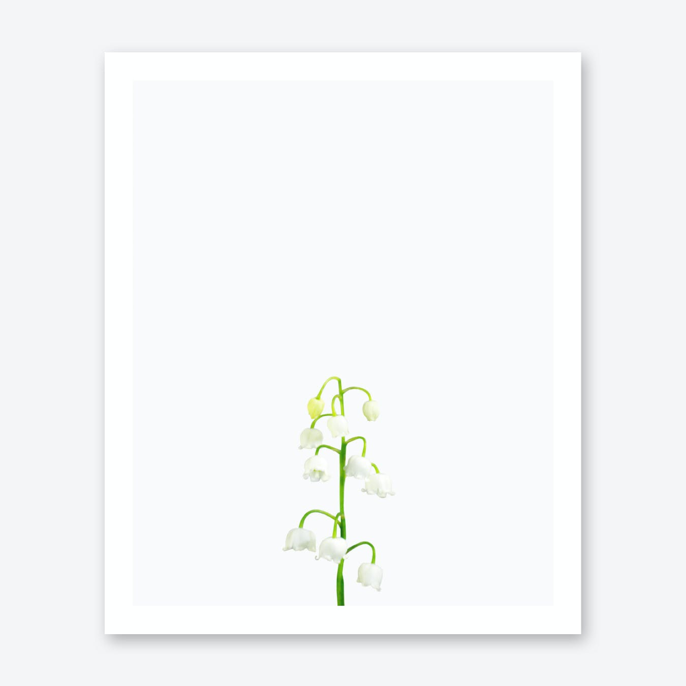 Lily of Valley Print