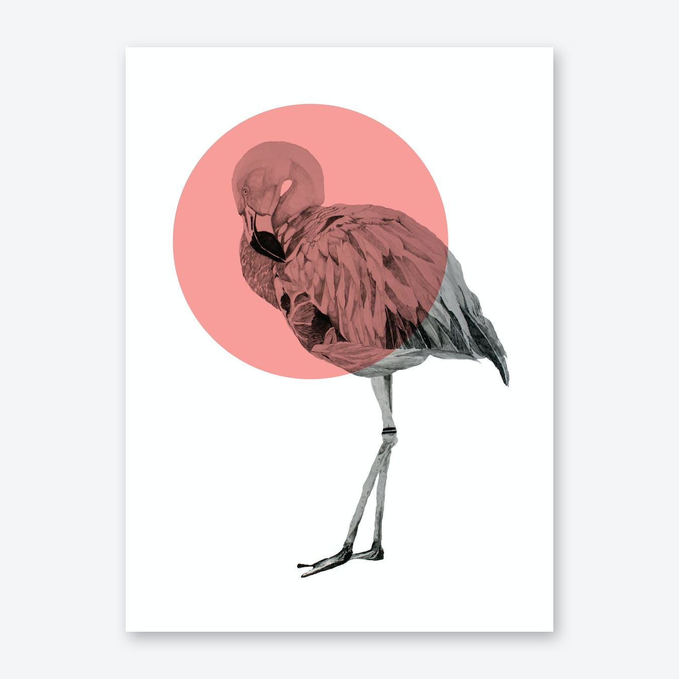 Flamingo I Art Print