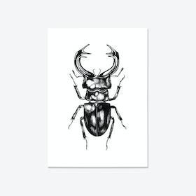 Stag Beetle Fine Art Print