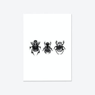 Dung Beetles Fine Art Print