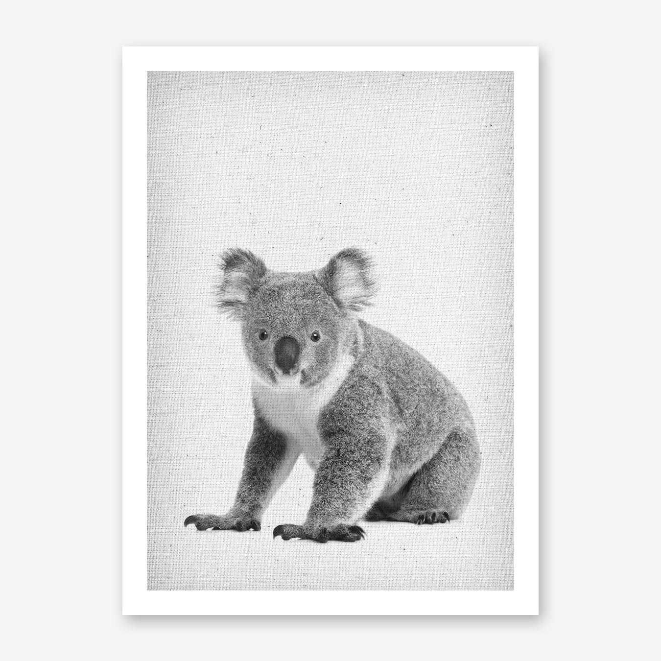 Koala II Art Print