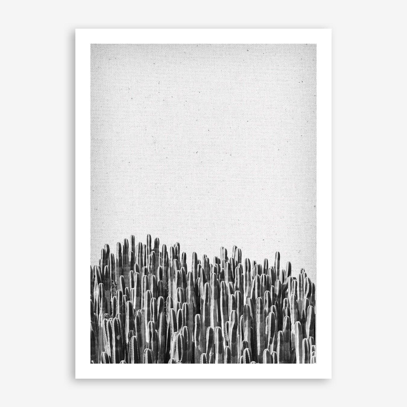 Cacti III Print