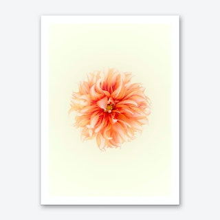Orange Flower Art Print
