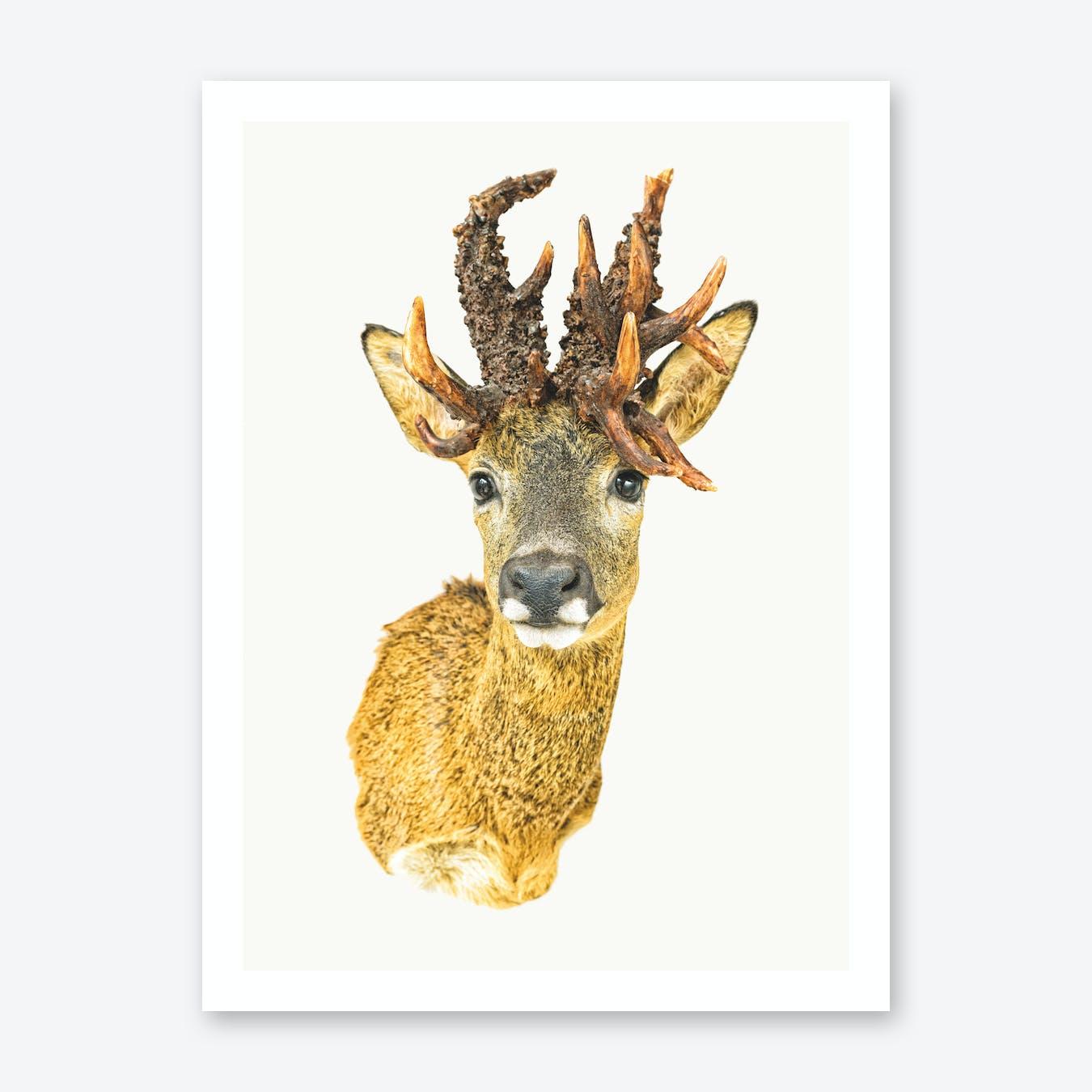 Animal I Print