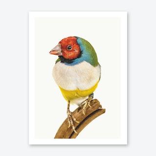 Birds VI Art Print