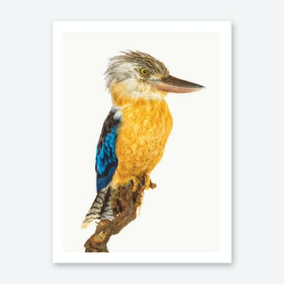 Birds VII Art Print