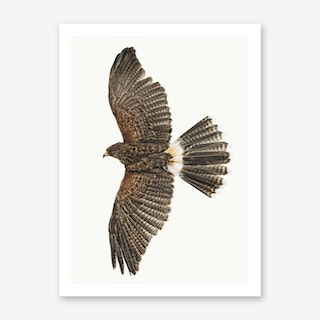 Birds IX Art Print