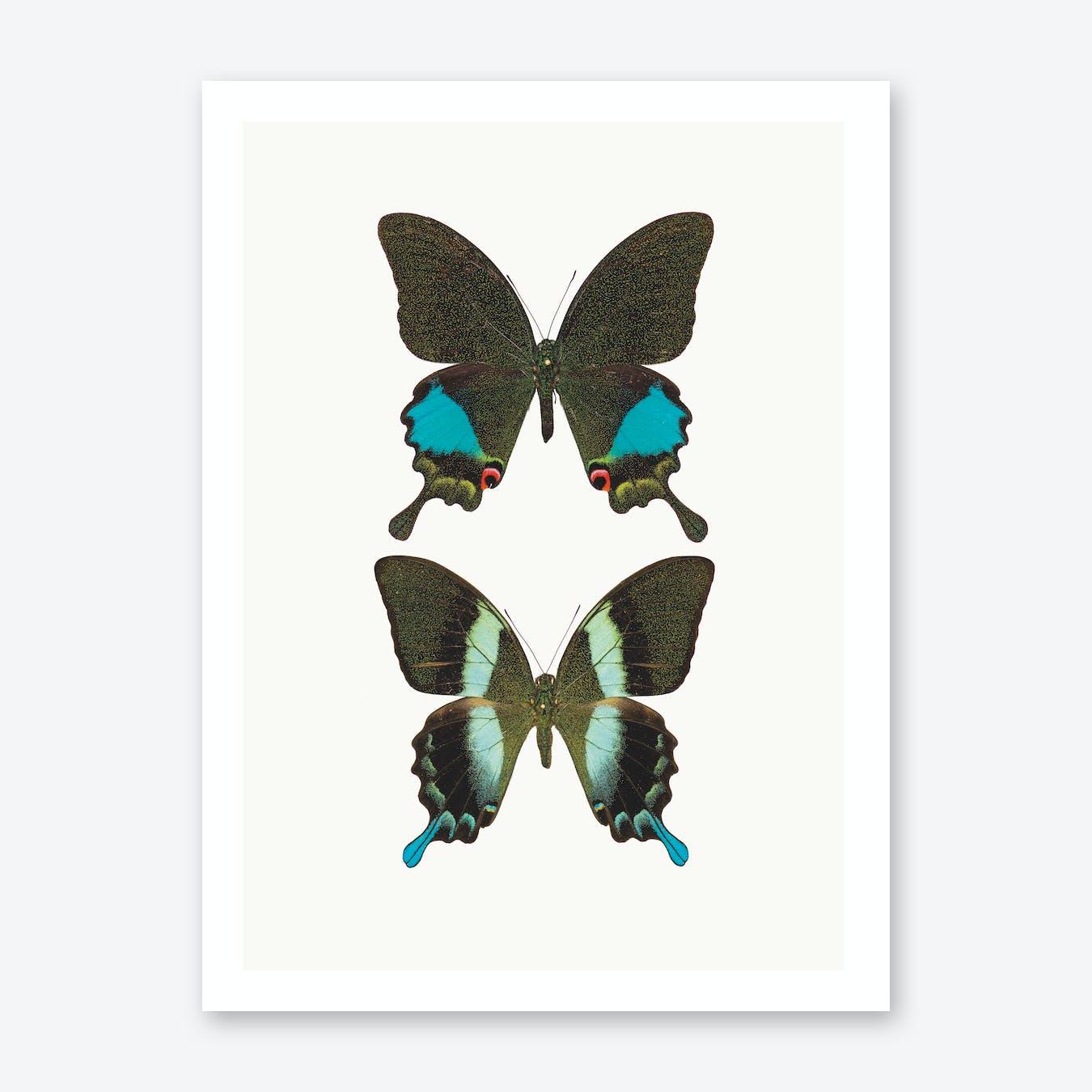 Butterflies II Print